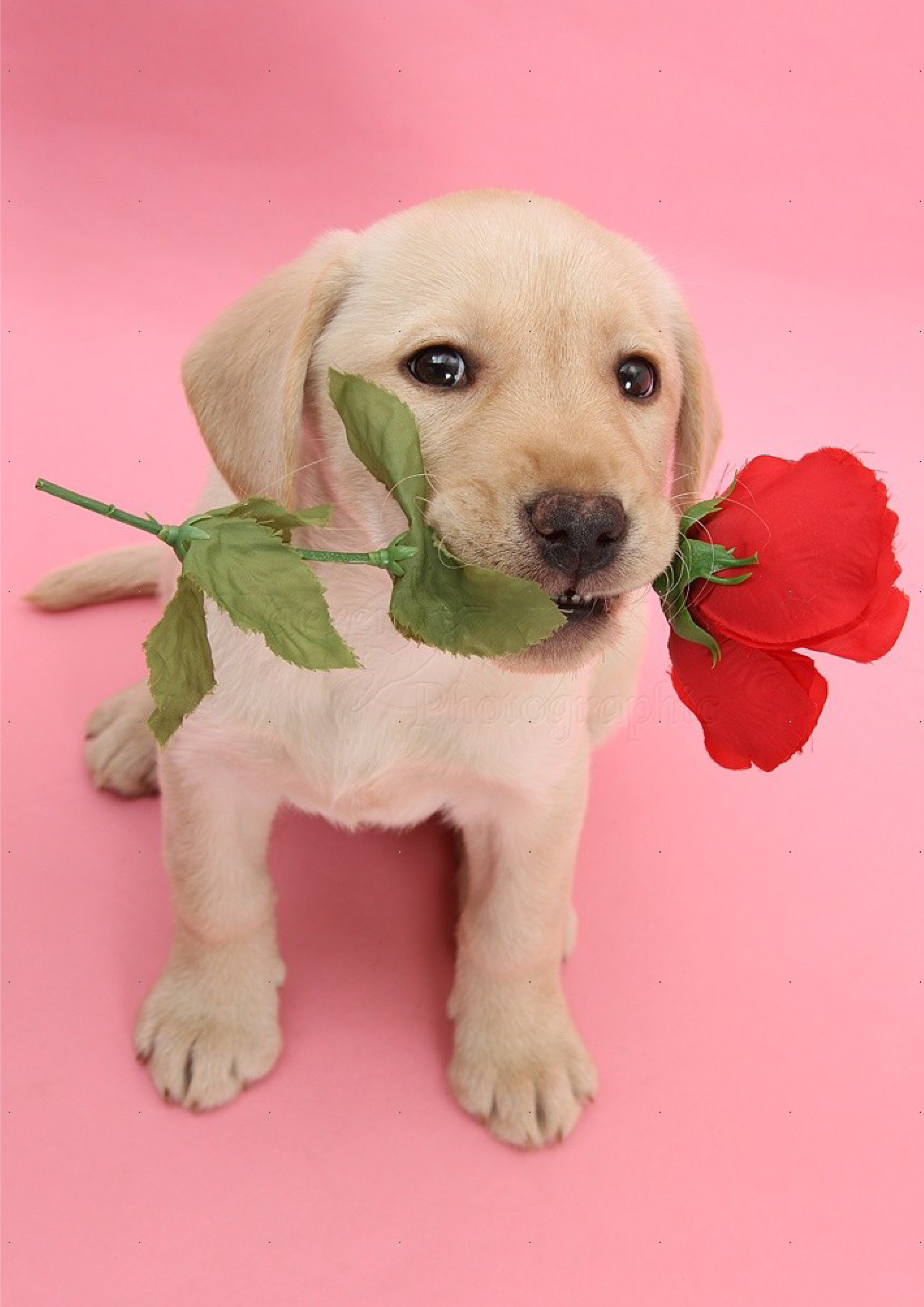 rose-lab.jpg