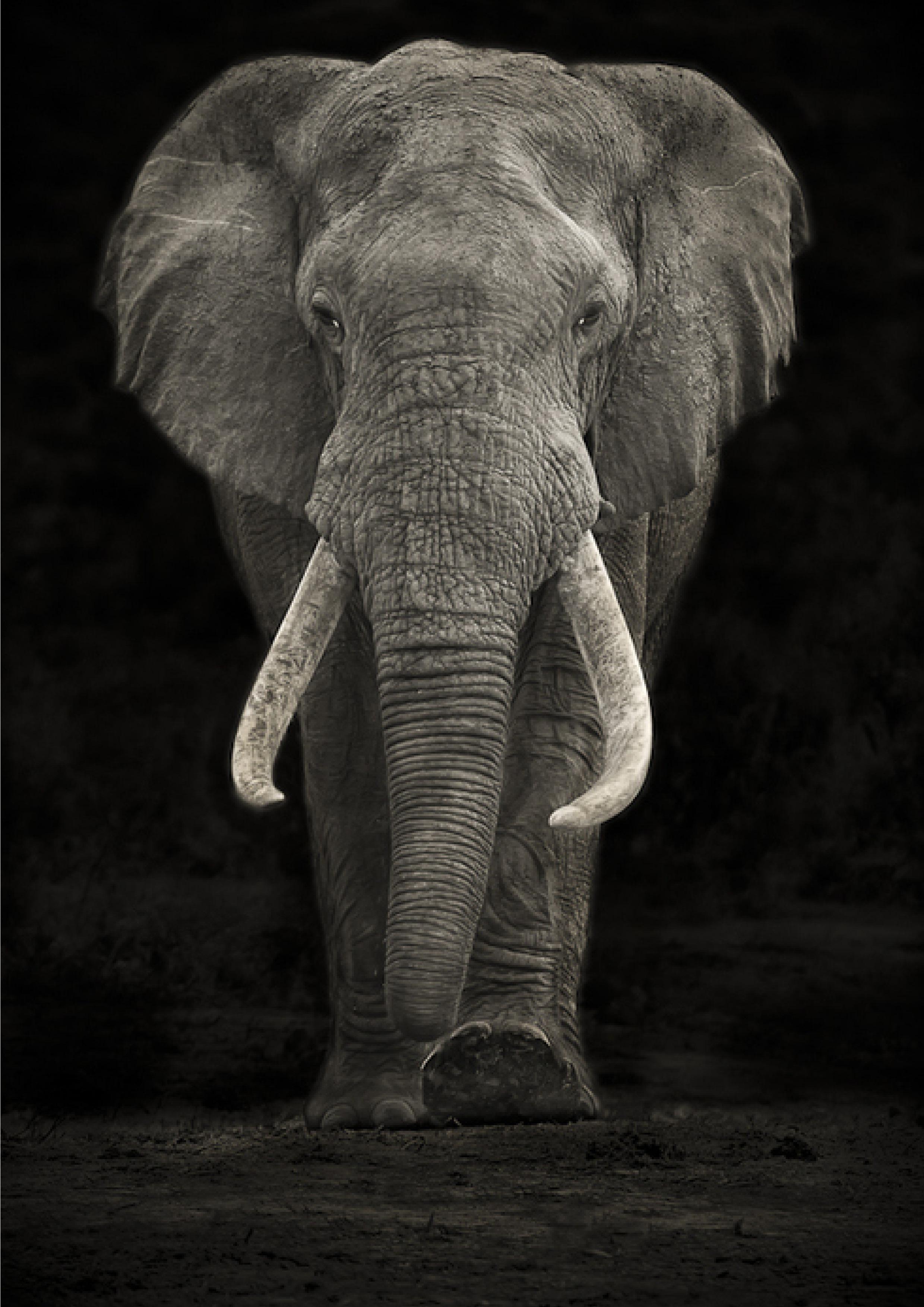 ginger-elephant.jpg