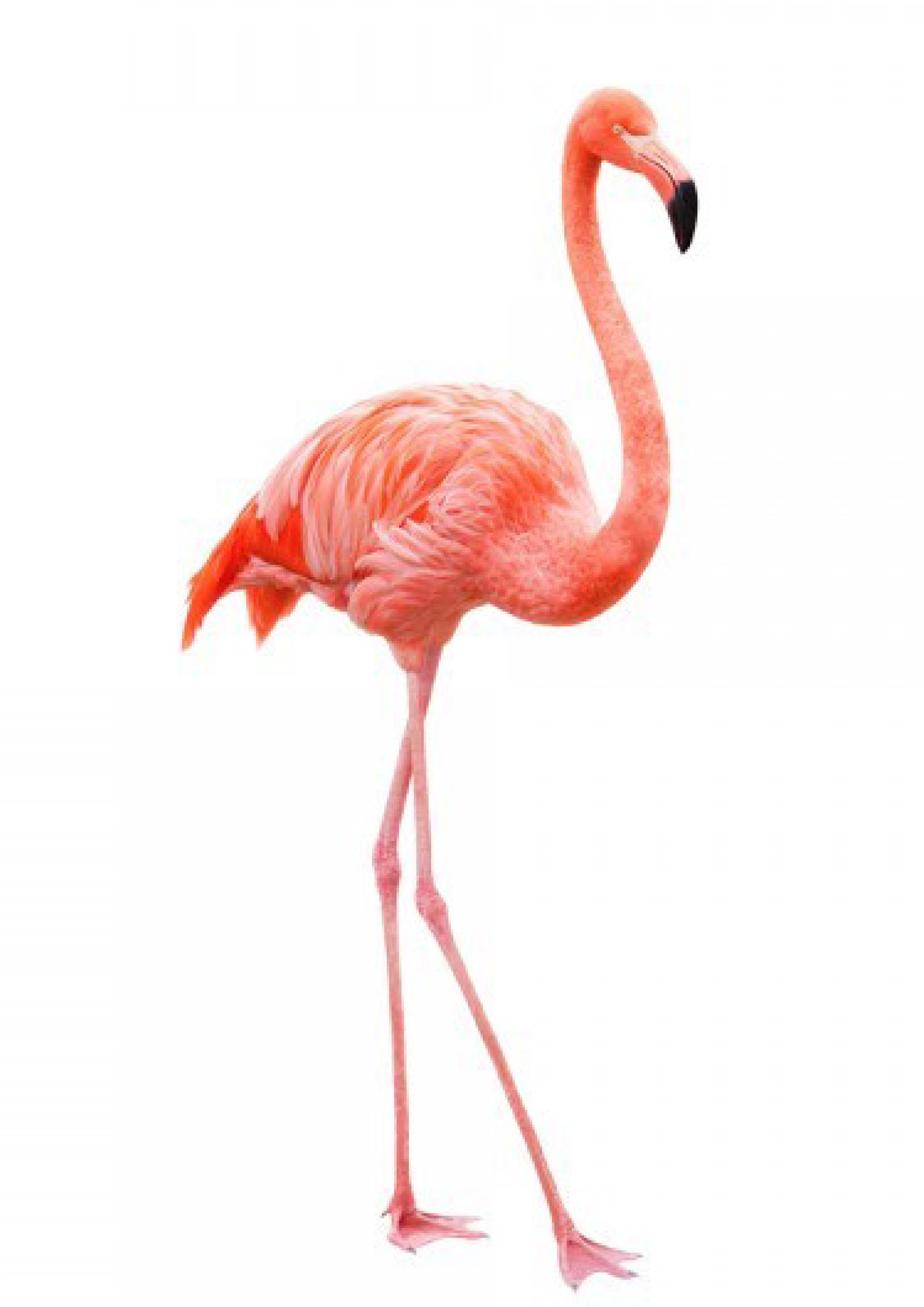 sofia-flamingo.jpg