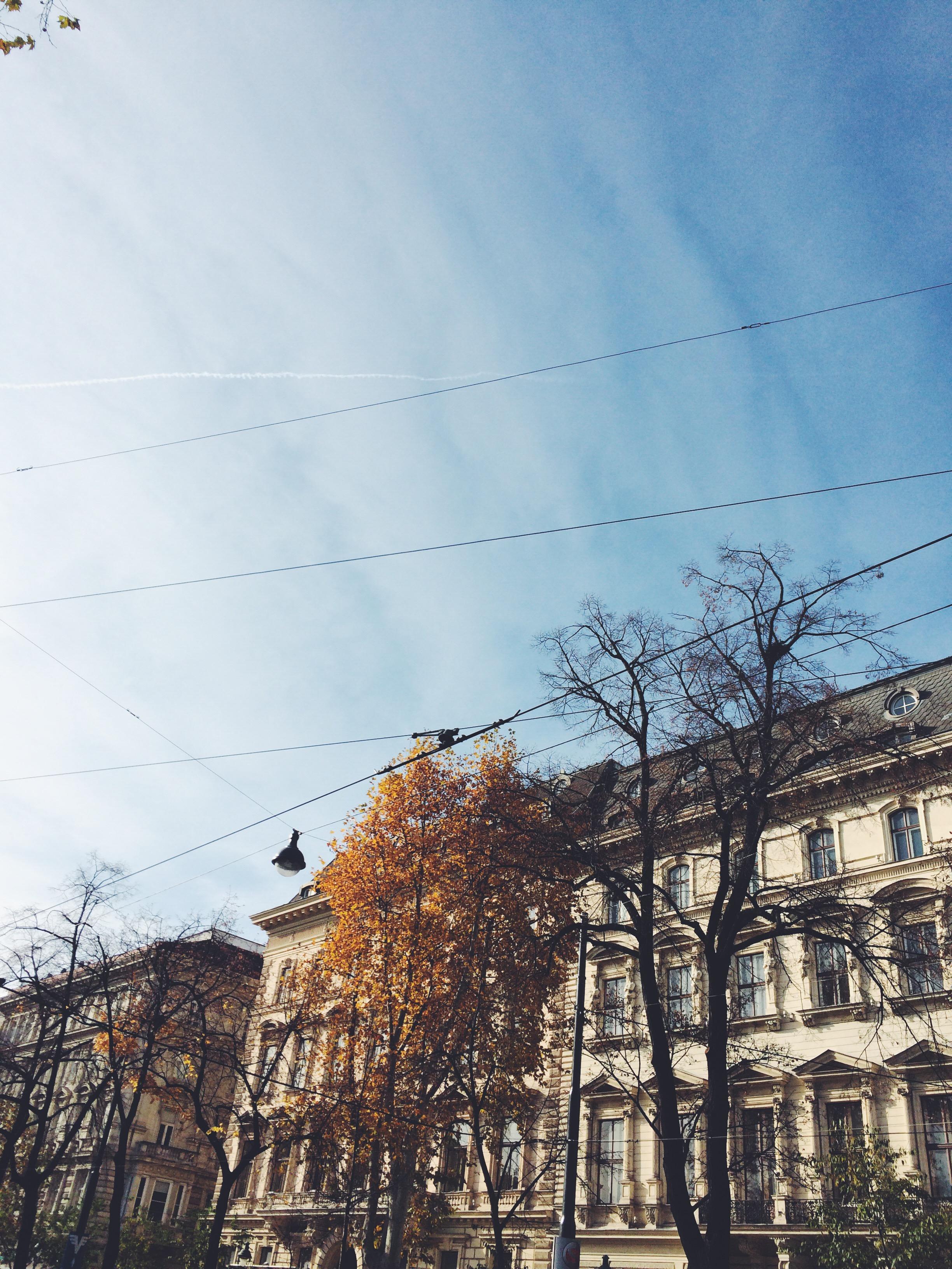 vsco-photo-2.jpg