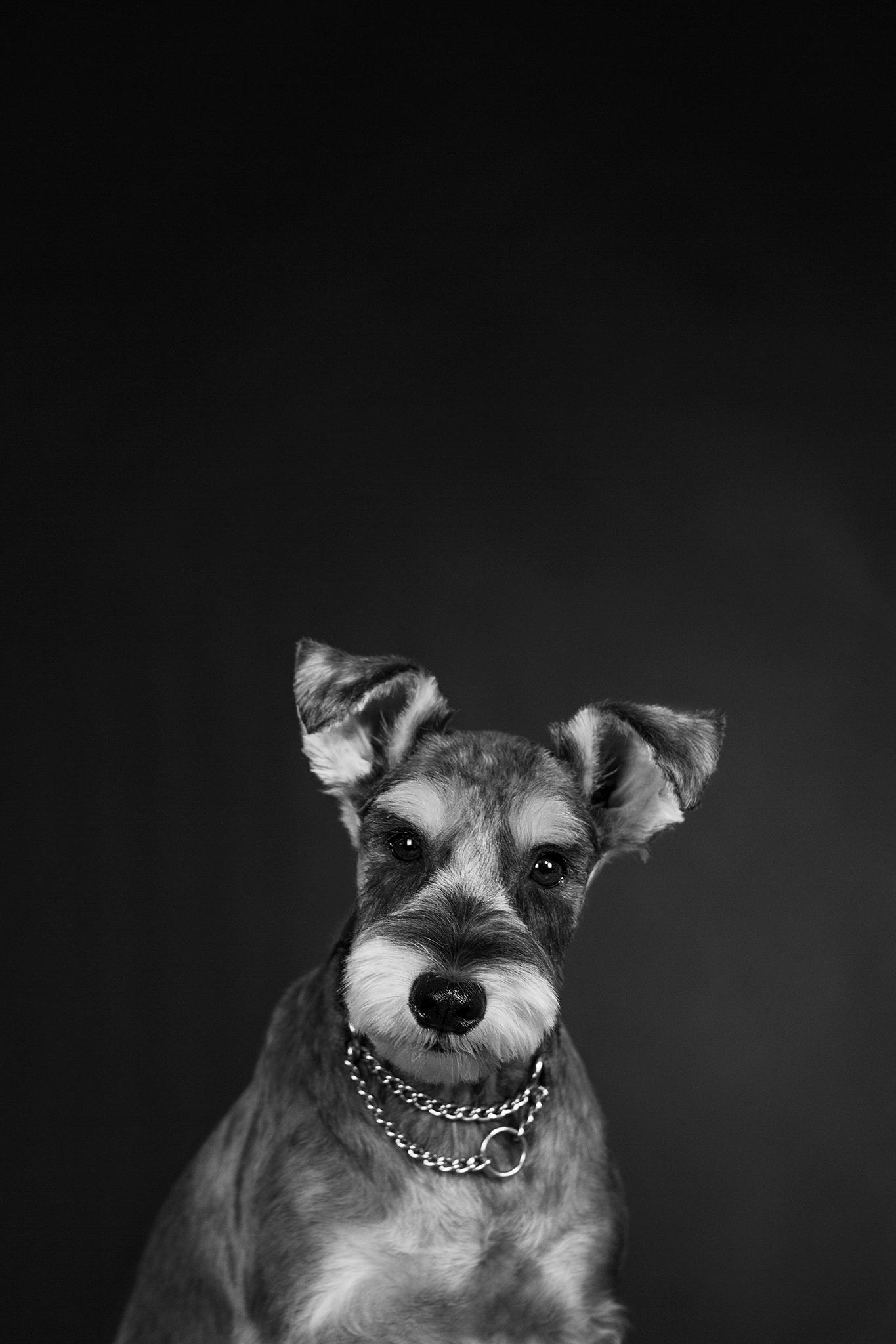 Pets-0667.jpg