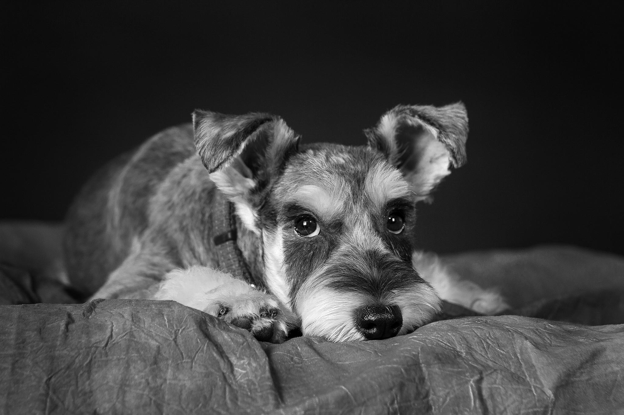Pets-0616.jpg
