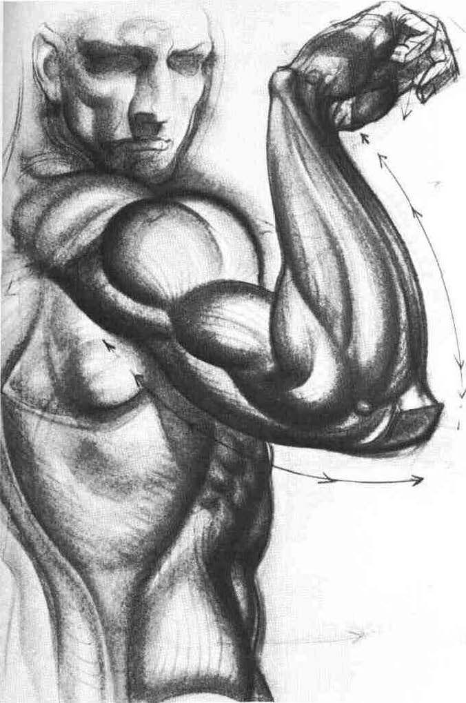 2be6c37a6167c34bbf504fc5d4222dca--science-biology-anatomy-drawing.jpg
