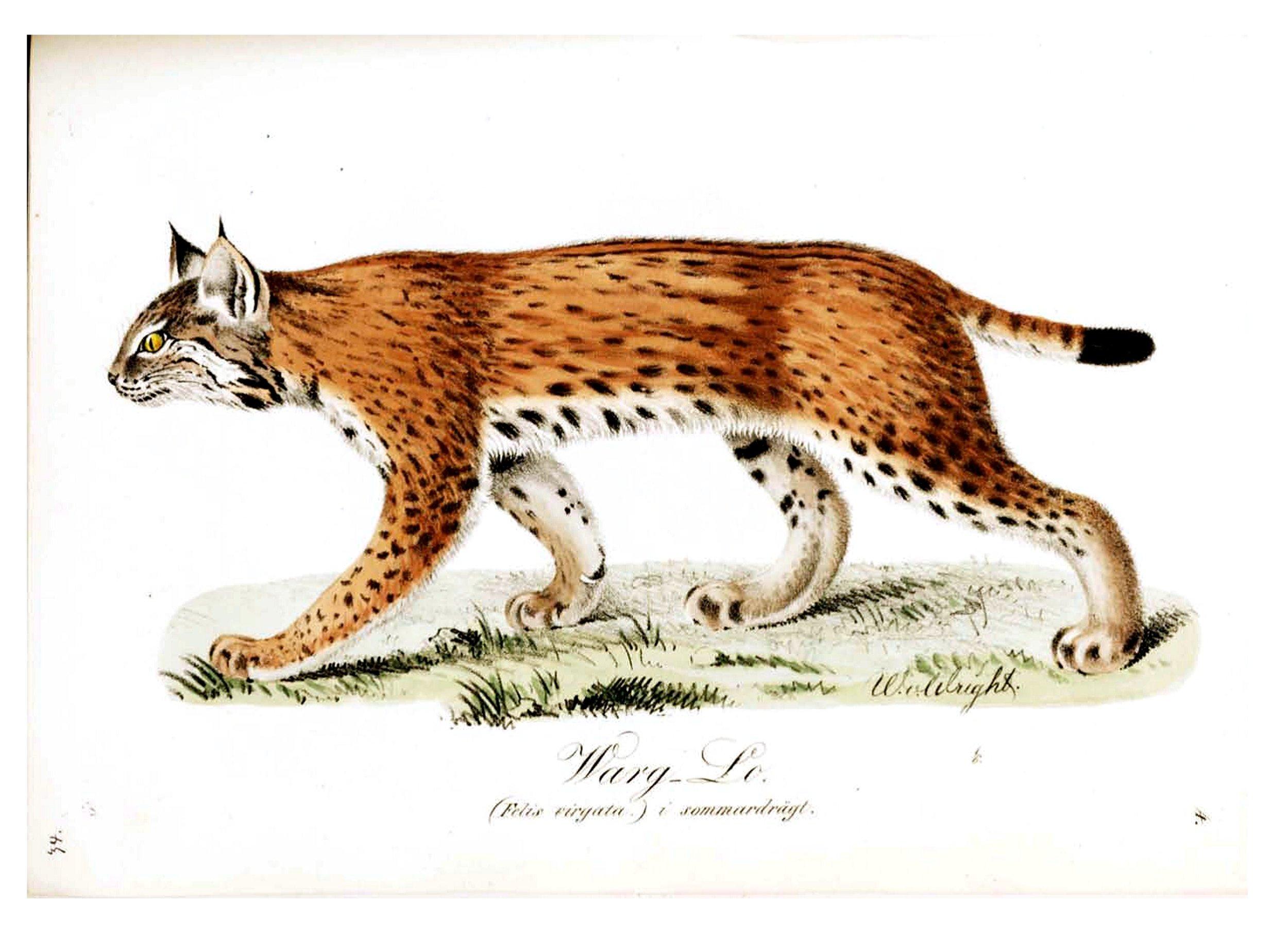 Animal-Illuminerade-Figurer-Cat-Warg-Lo-Lynx-summer.jpg