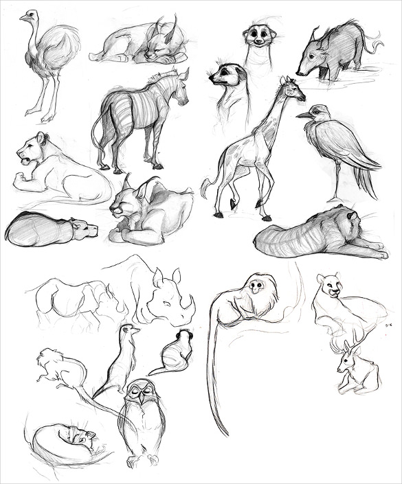 Set-of-Animal-Drawings-PNG-Download.jpg