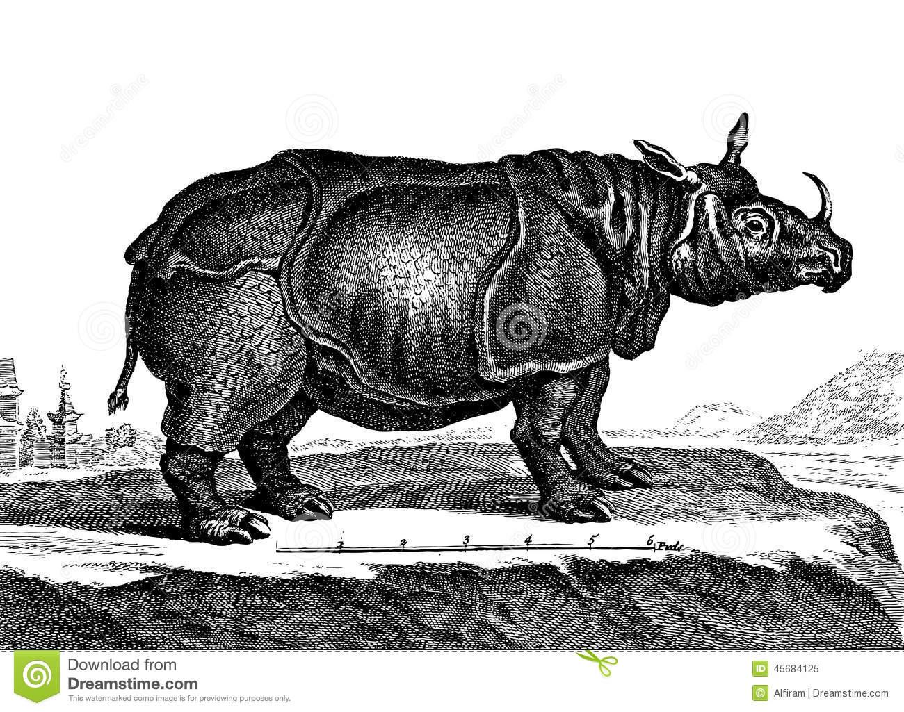 rhino-vintage-engraved-illustration-diderot-d-alembert-encyclopedia-45684125.jpg