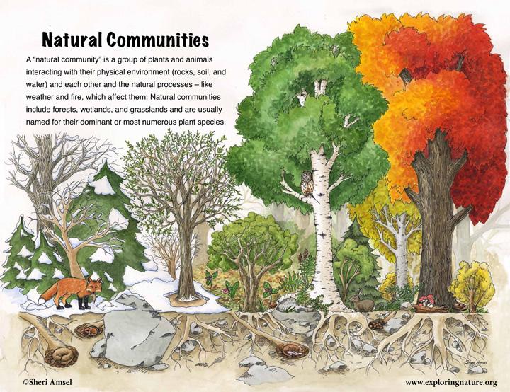 natural_communities_sign.jpg