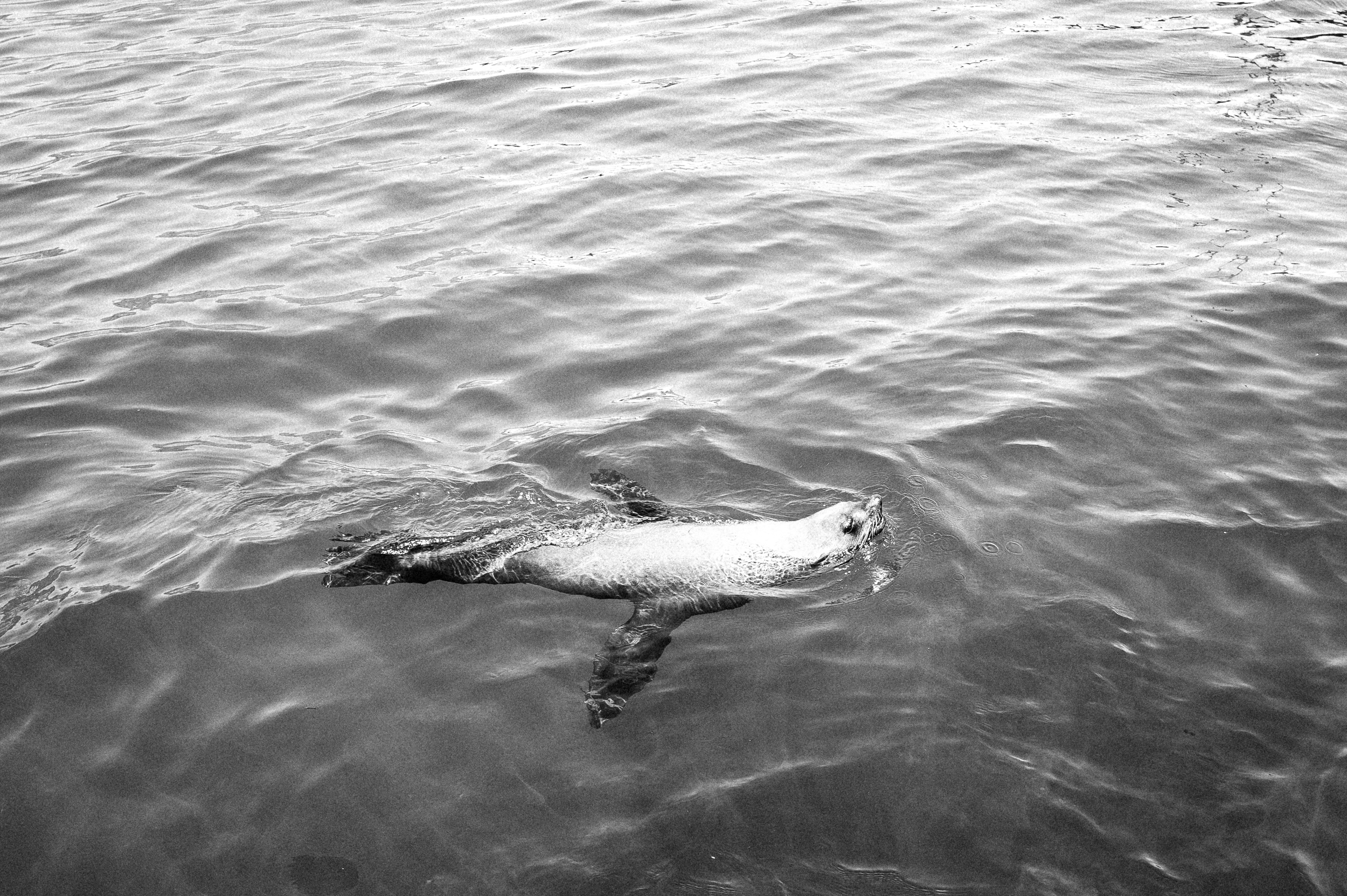 Seal, South Africa