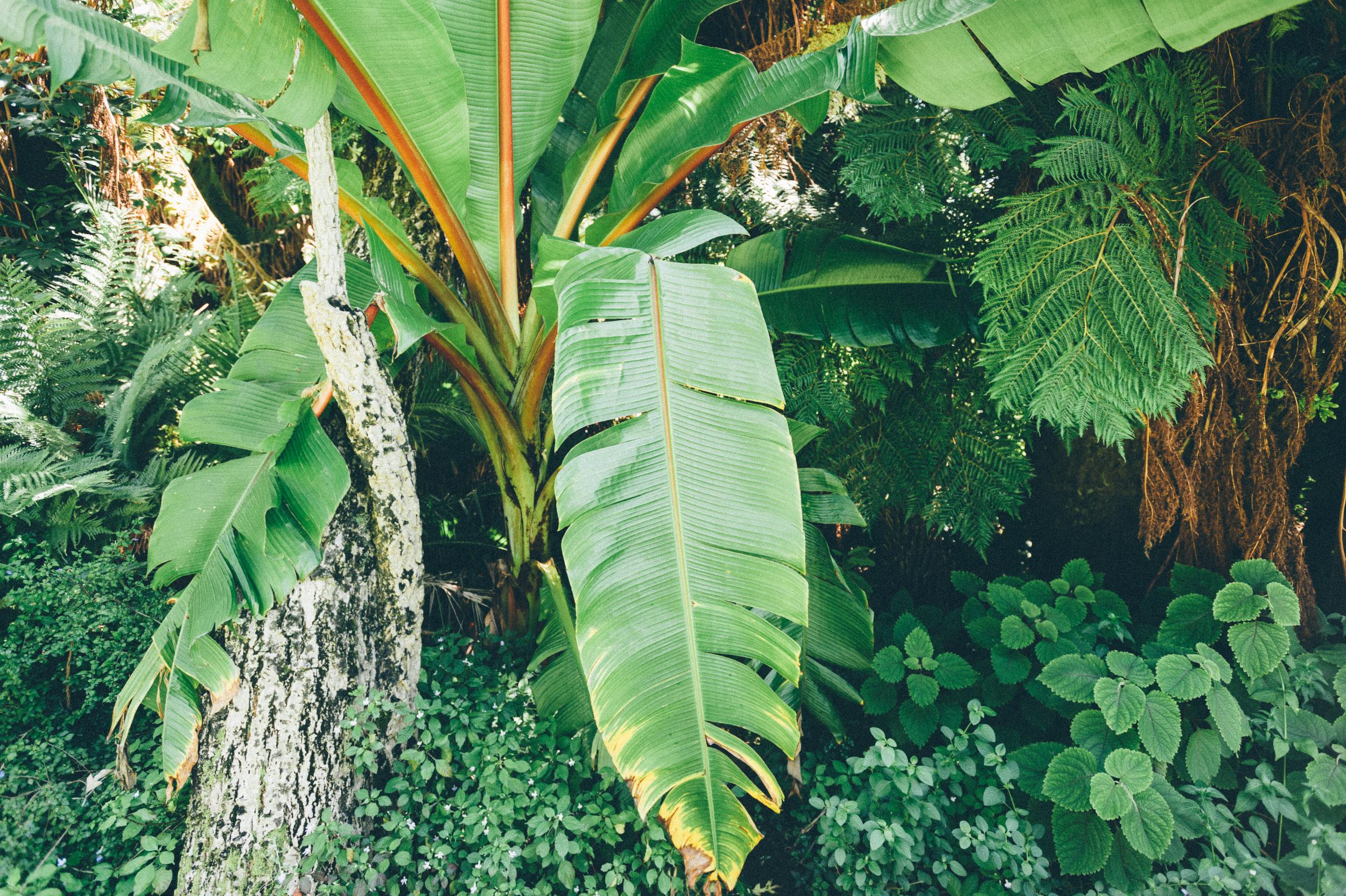 Plants, Kirstenbosch, South Africa