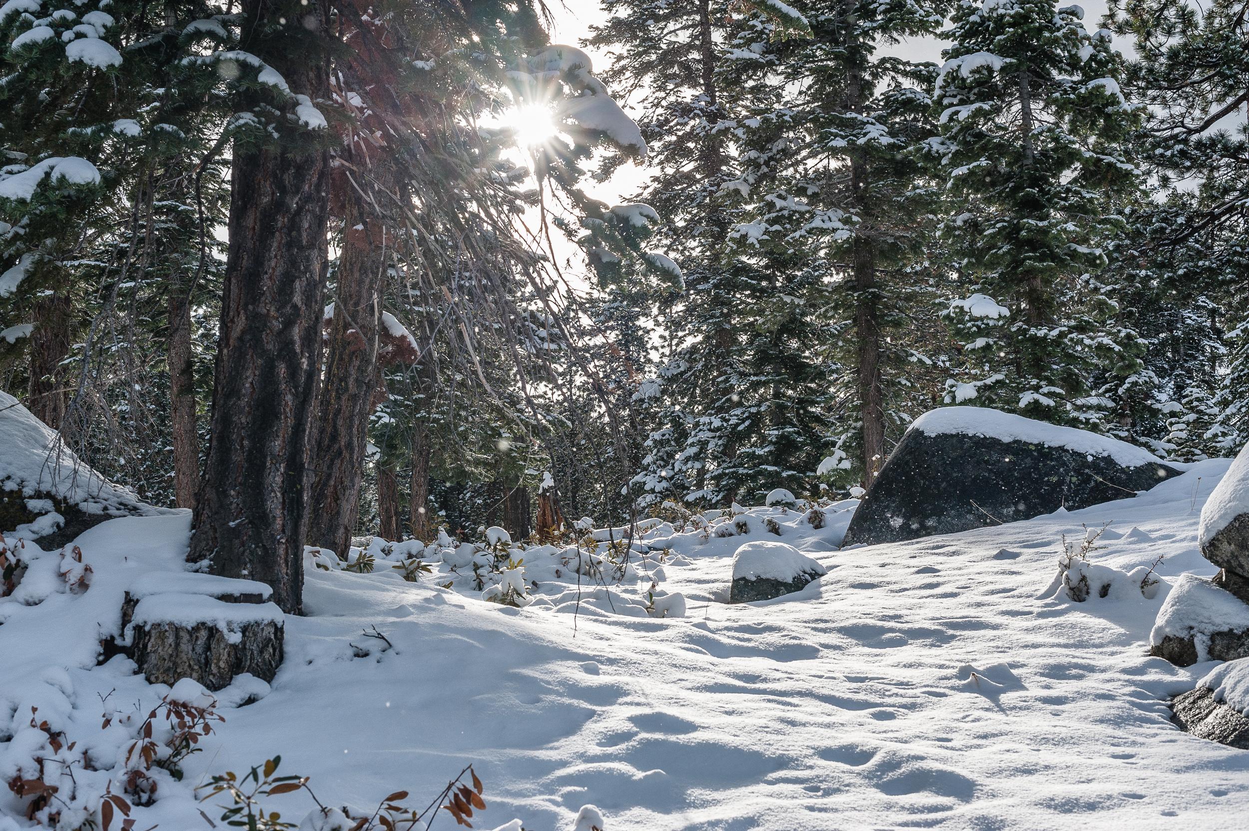 Trees, Lake Tahoe, USA