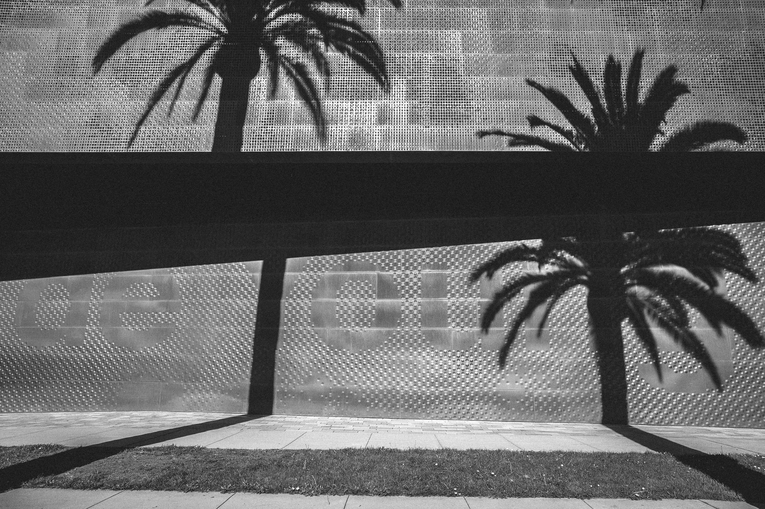 Palms, San Francisco