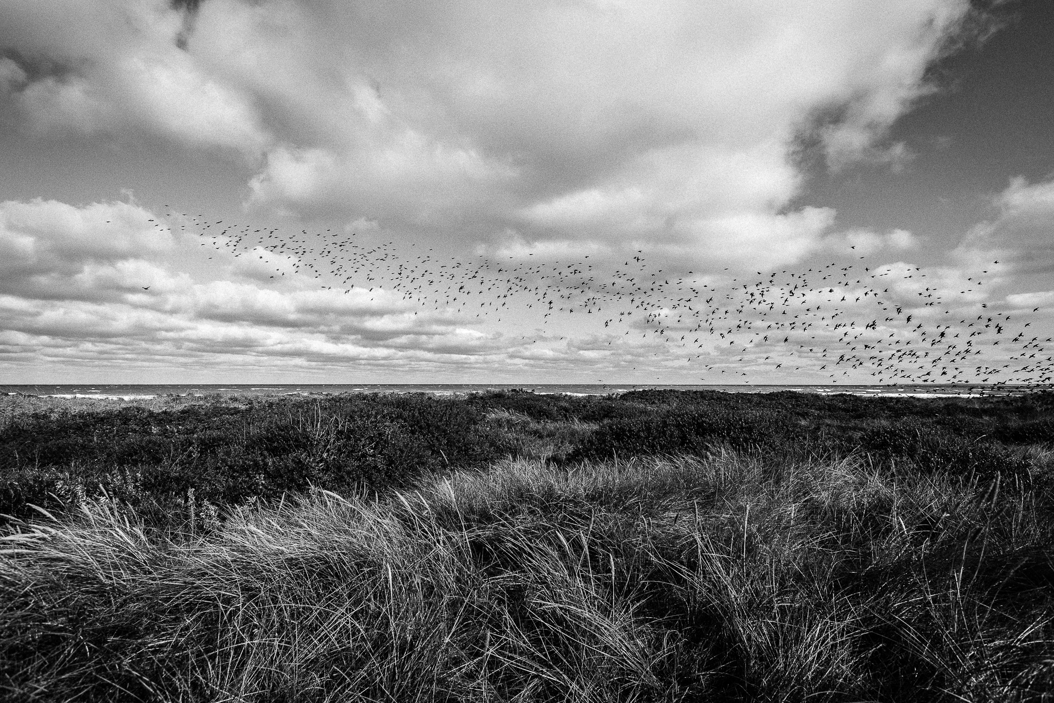 Swarm, Denmark