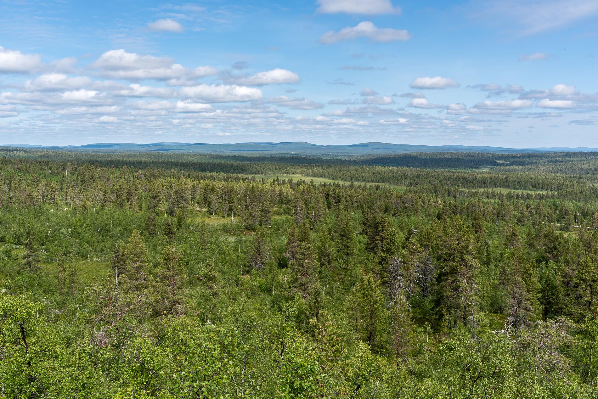 Finland, Trees
