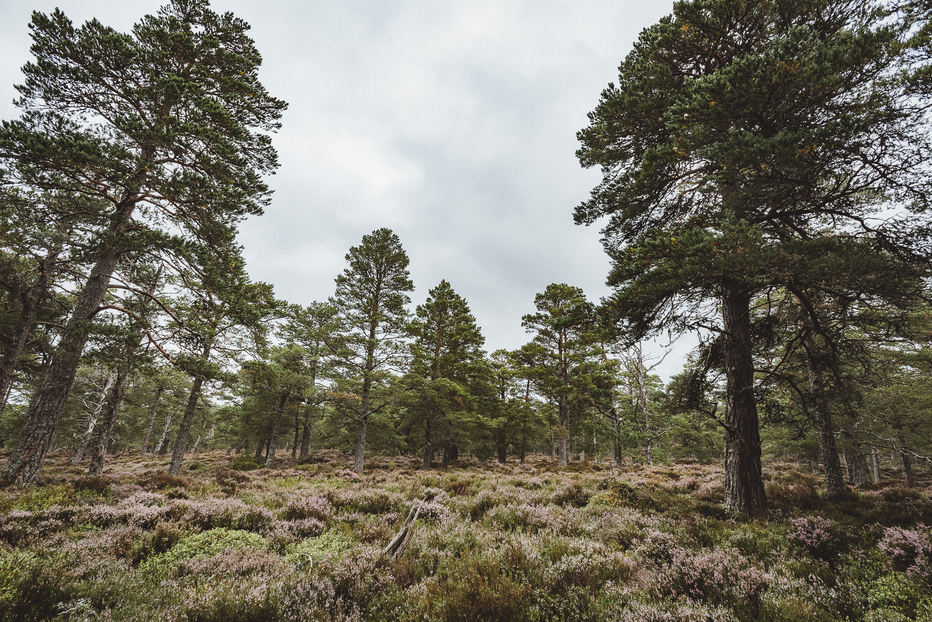 Trees, Scotland