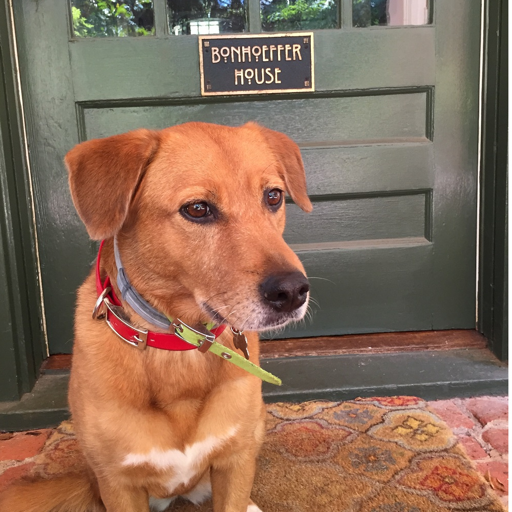 ginger at the door square.jpg