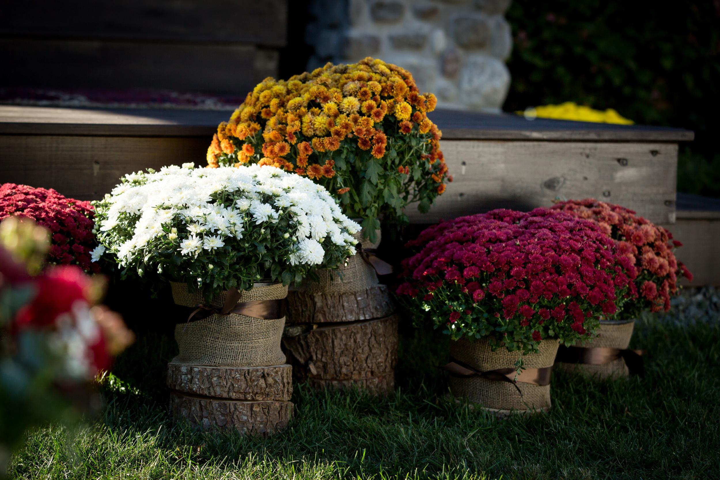 fall_wedding_burlap_tree_stump_mums_flower_arrangements