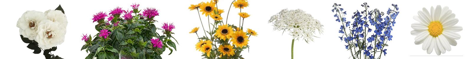 flower_meanings_mary_justi.jpg