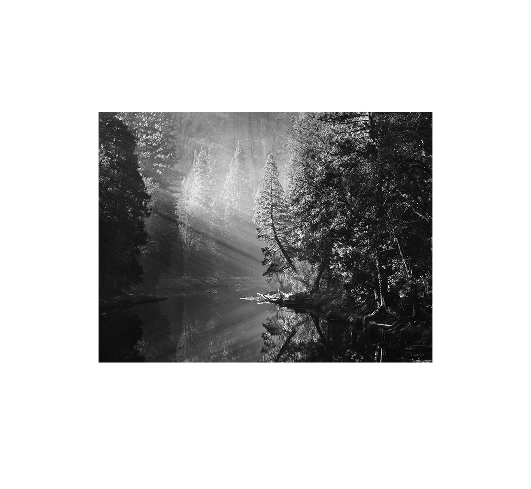 Symphony Forest