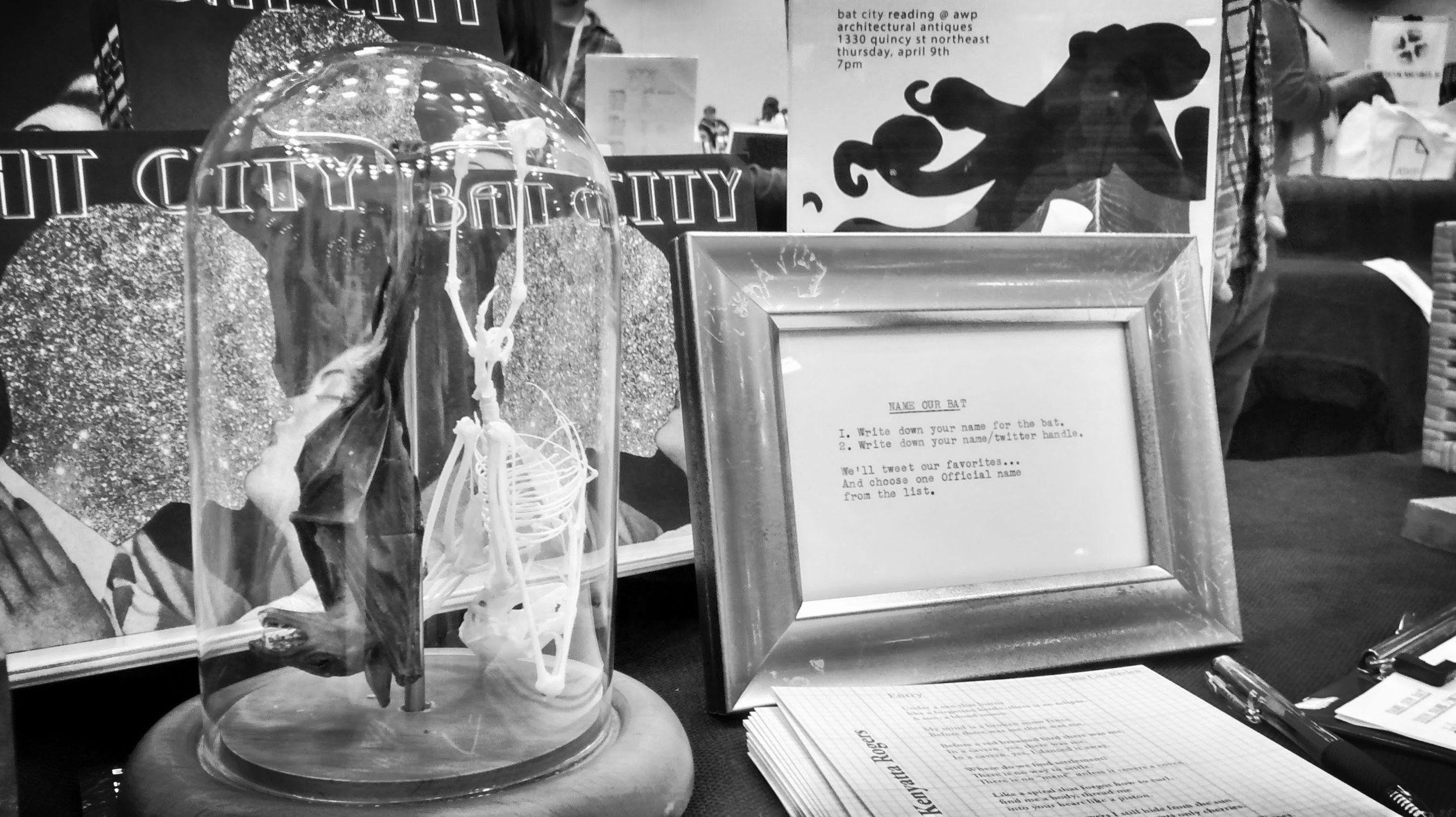 Tabitha, our taxidermy bat AWP 2015 Bookfair