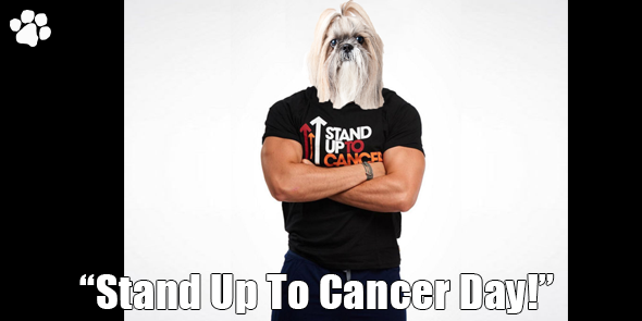 BossHam-Stand-Up-For-Cancer-TW.png