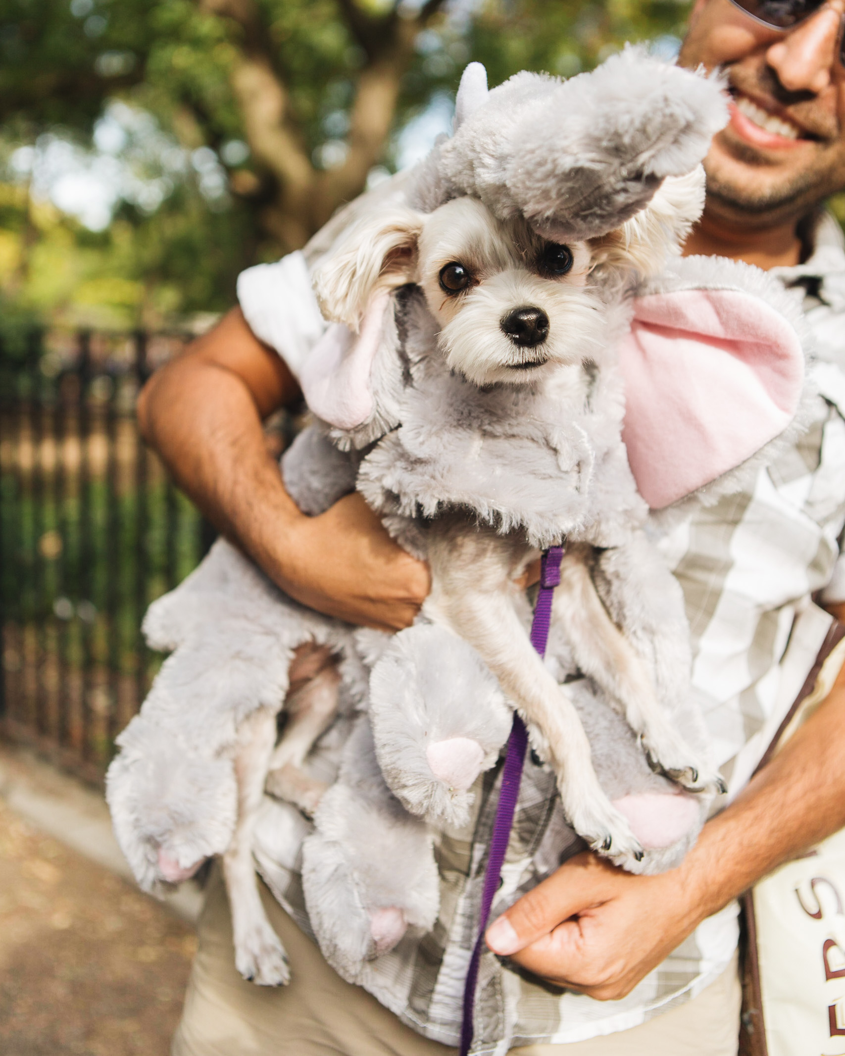 dog parade-annaletson-2.jpg