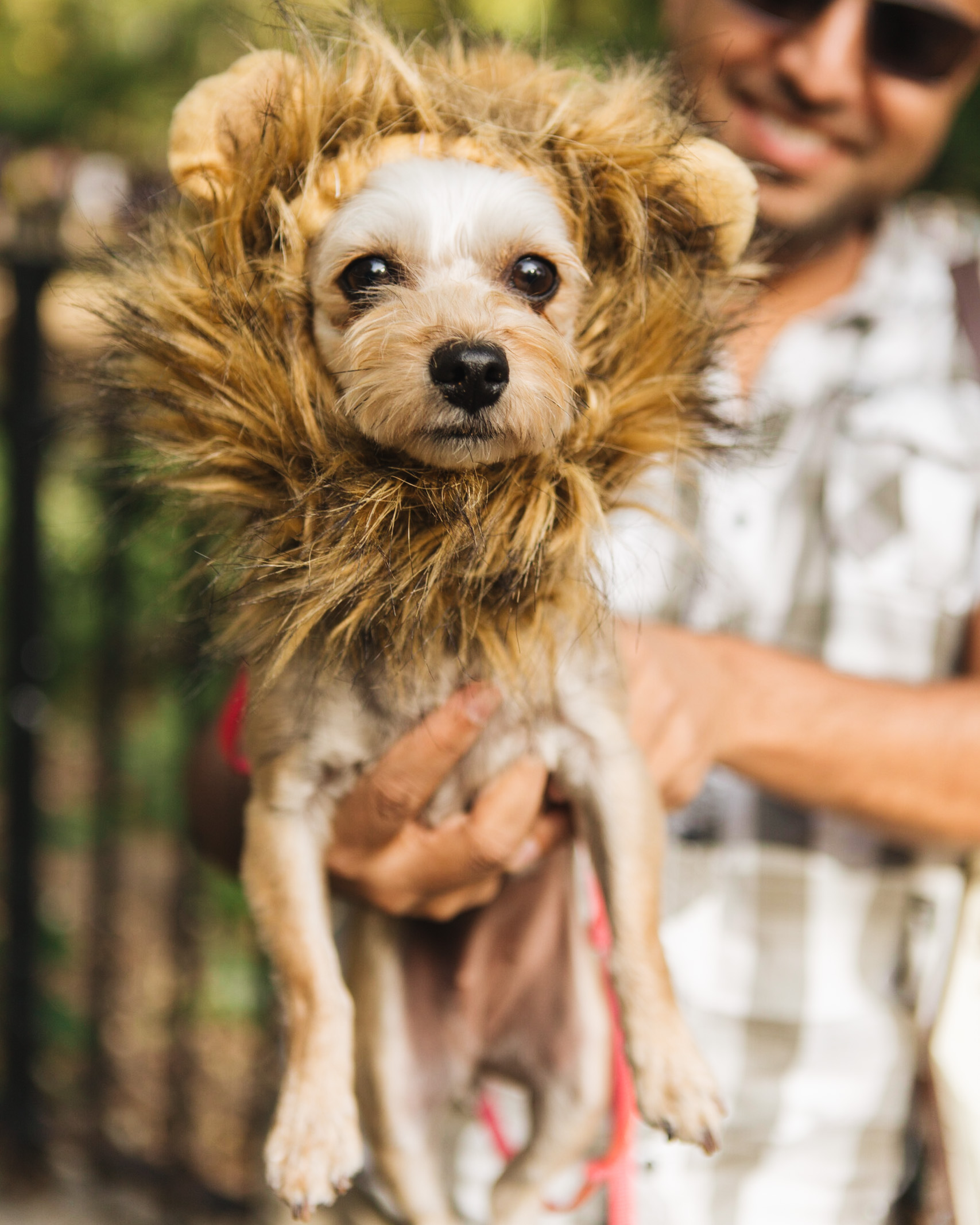 dog parade-annaletson-3.jpg