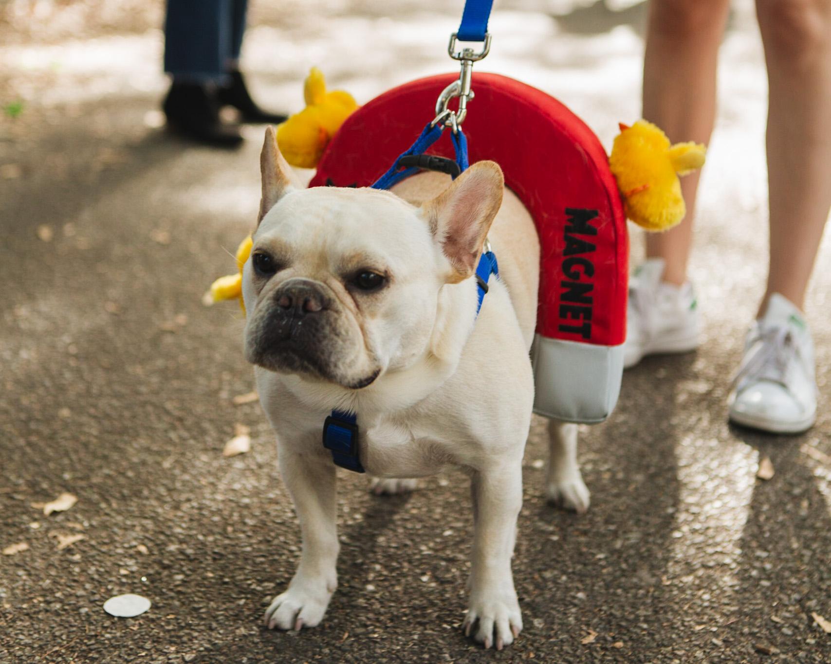 dog parade-annaletson-4.jpg