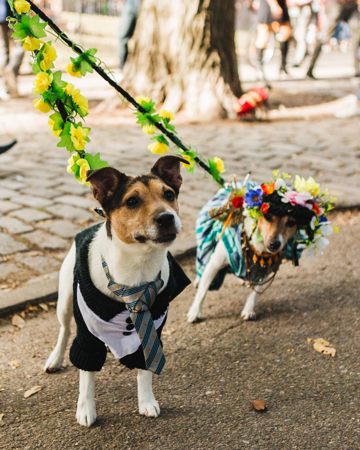 dog parade-annaletson-6.jpg