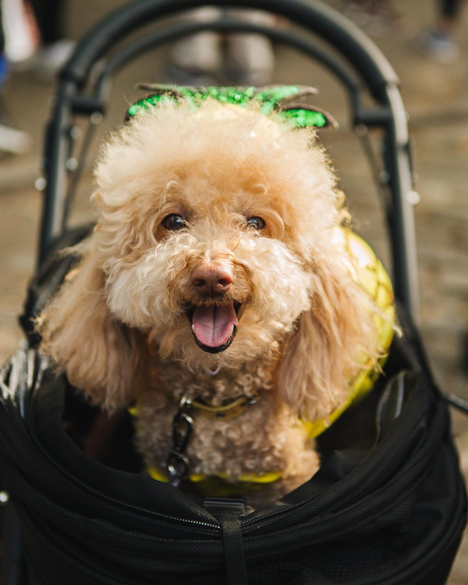 dog parade-annaletson-8.jpg