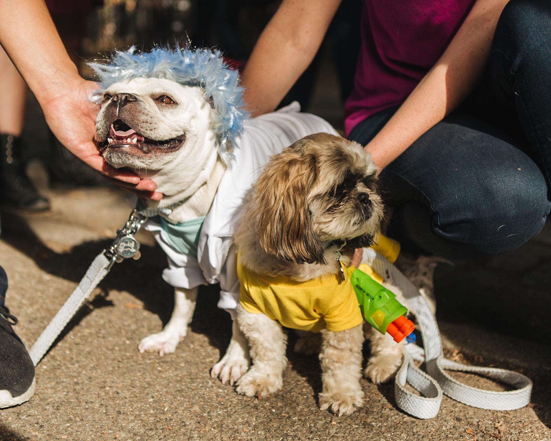 dog parade-annaletson-7.jpg