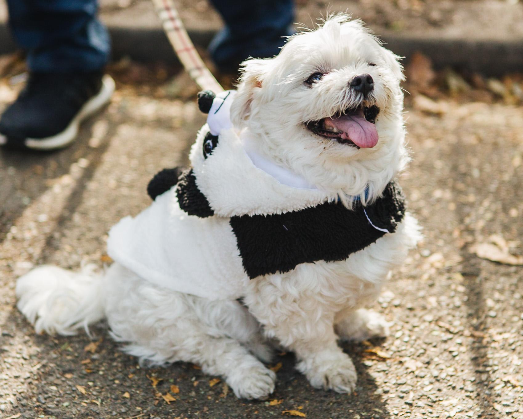 dog parade-annaletson-10.jpg