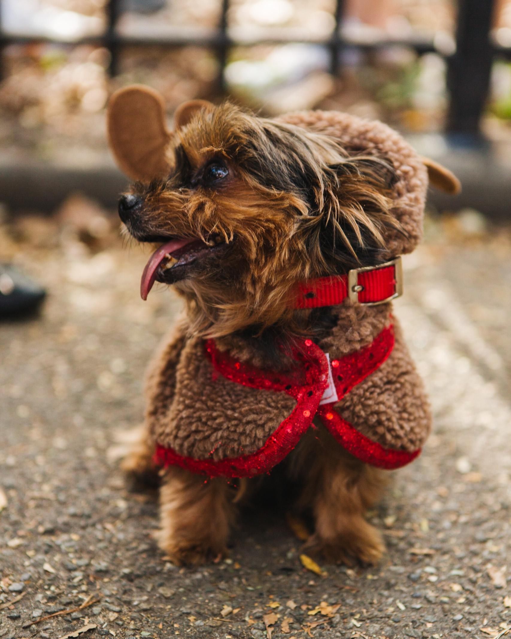 dog parade-annaletson-9.jpg