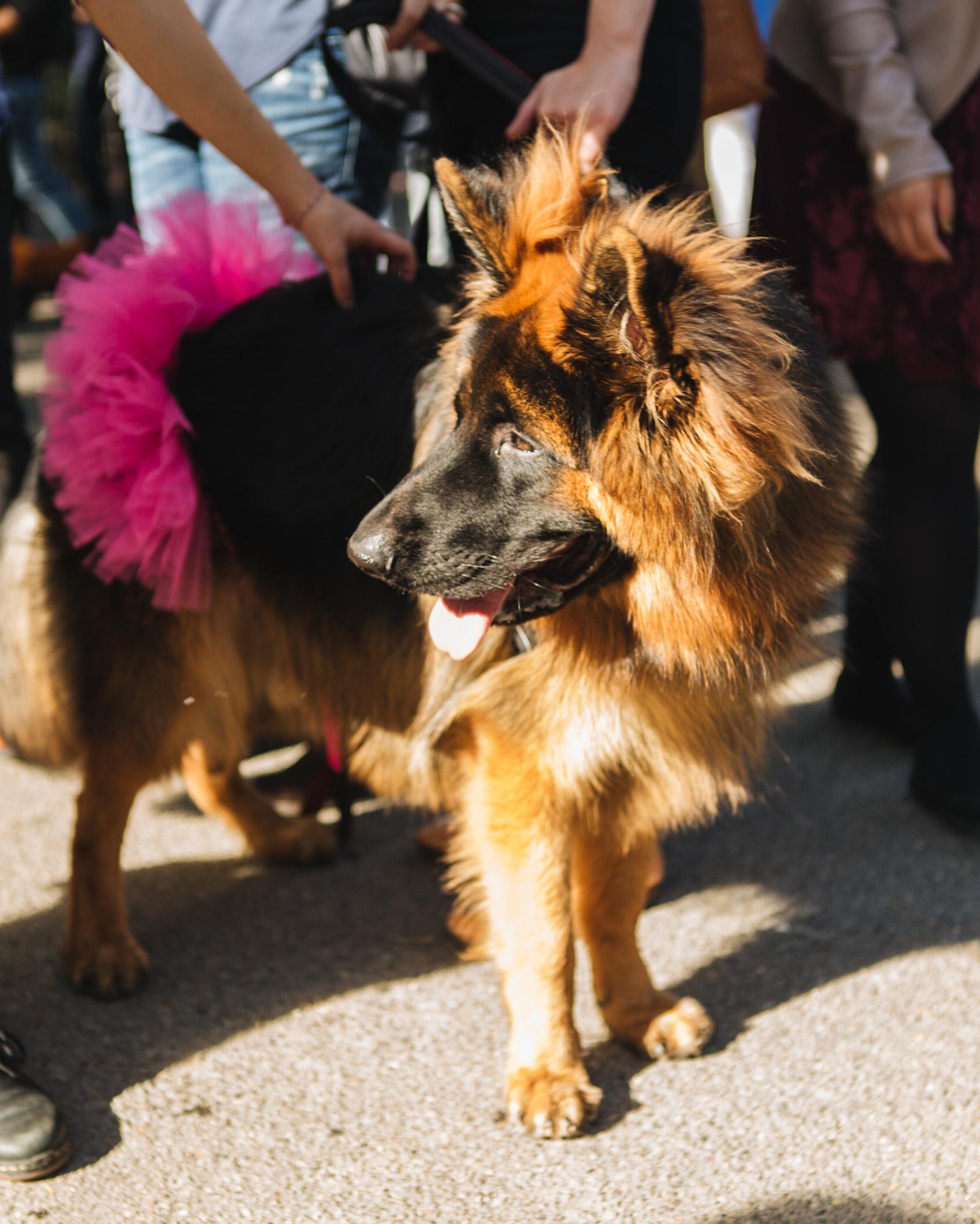 dog parade-annaletson-12.jpg