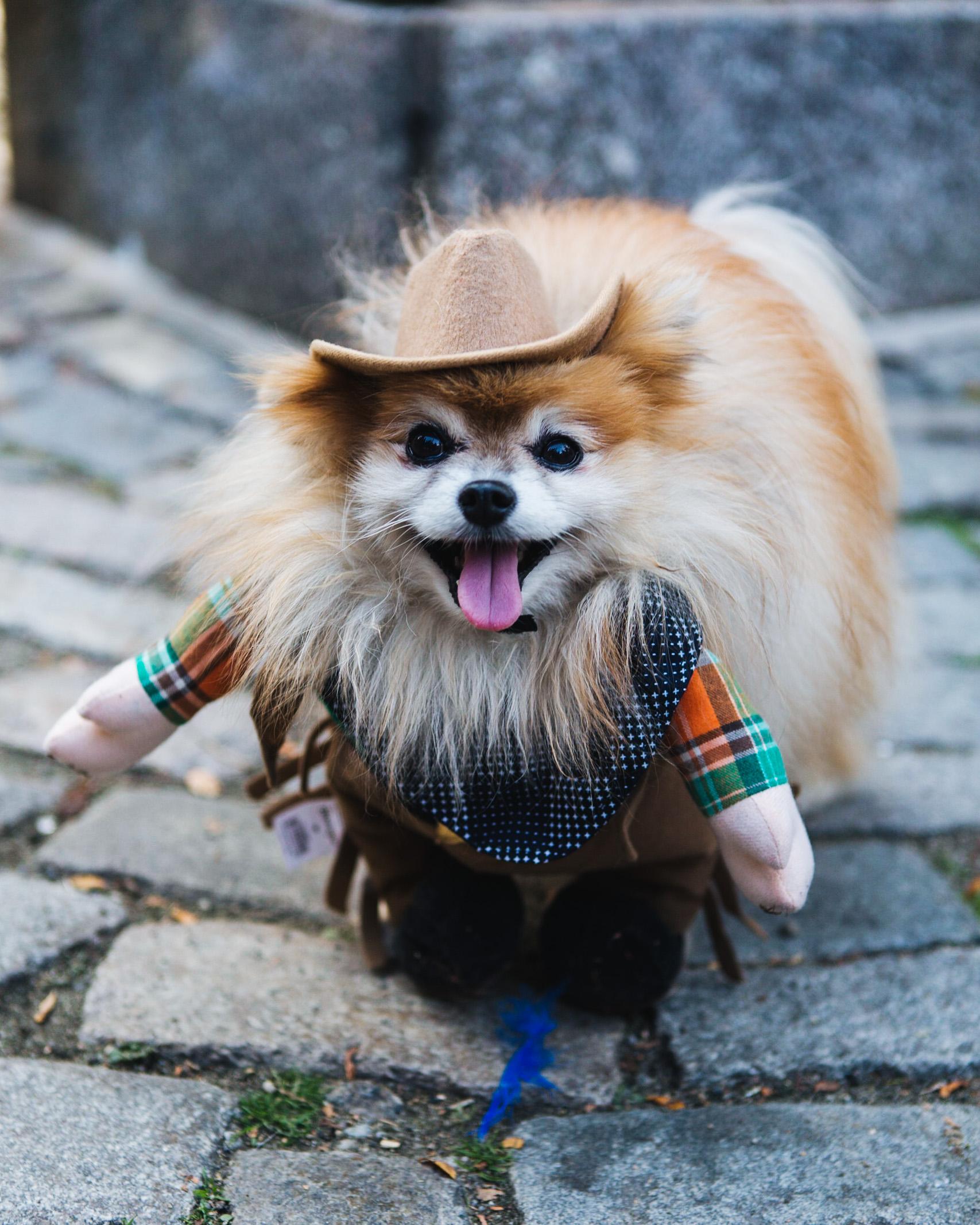 dog parade-annaletson-13.jpg