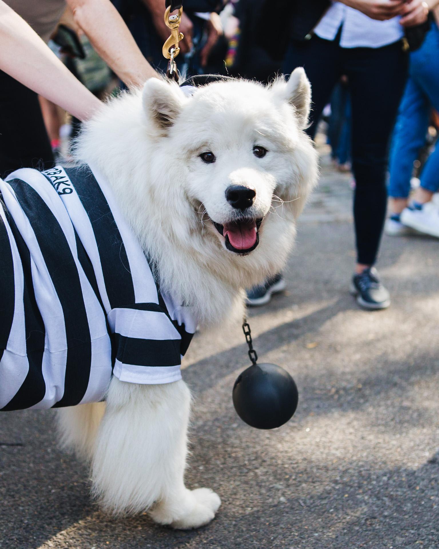 dog parade-annaletson-14.jpg