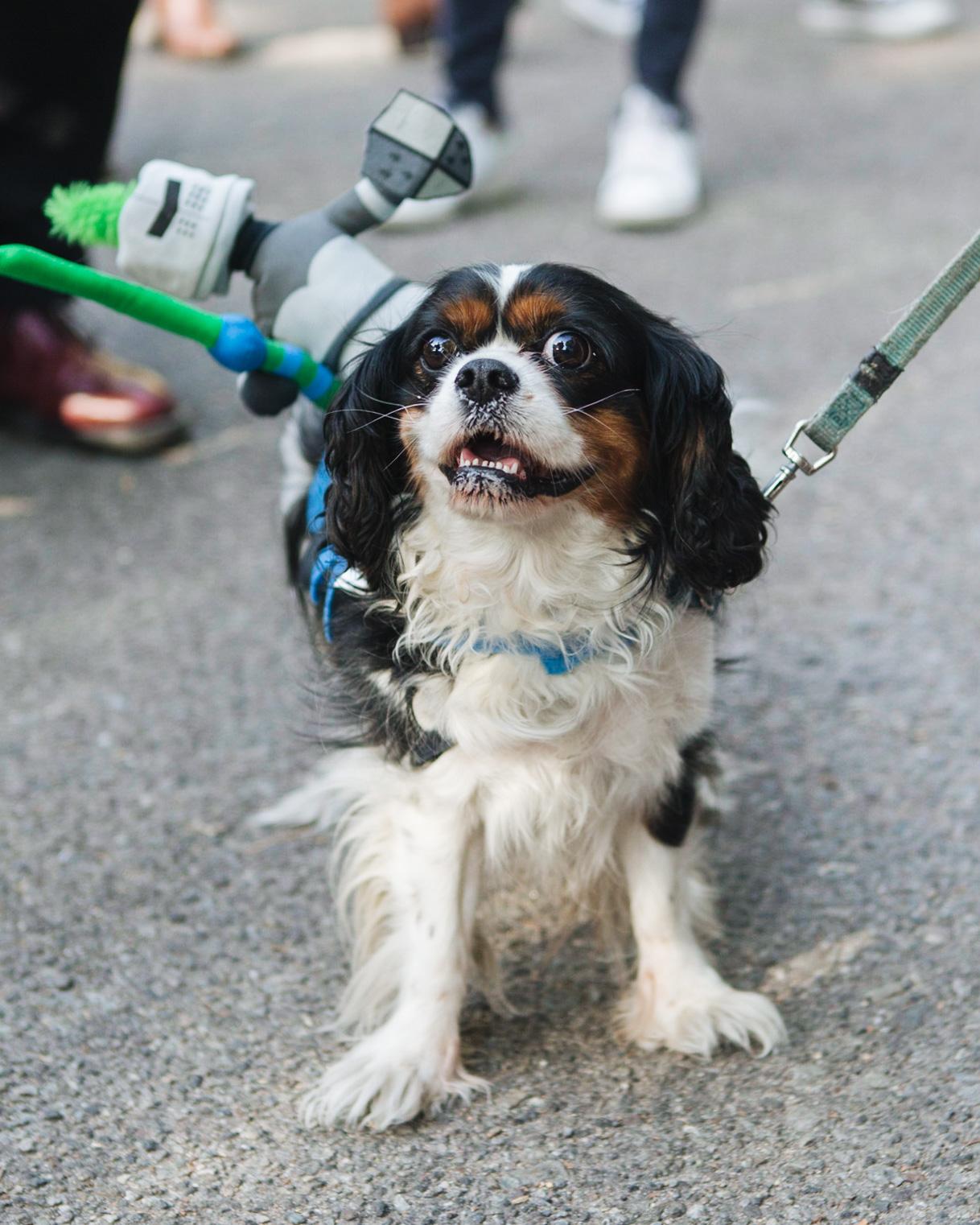 dog parade-annaletson-15.jpg