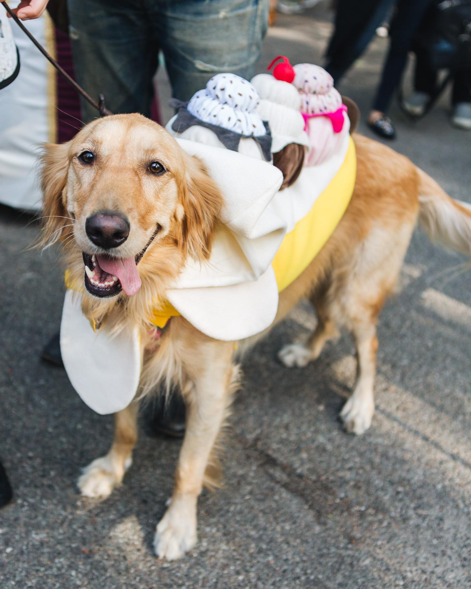 dog parade-annaletson-16.jpg