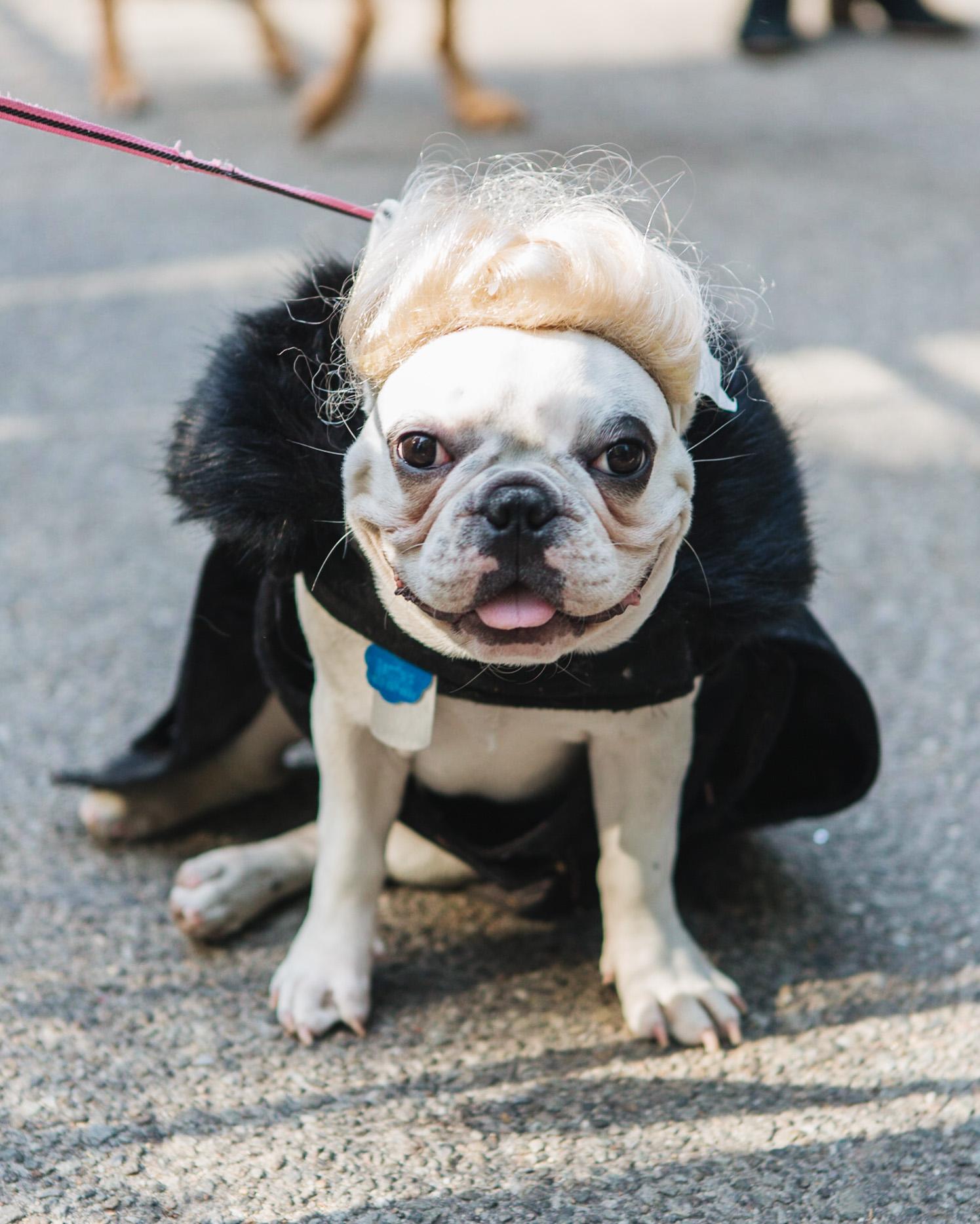 dog parade-annaletson-17.jpg