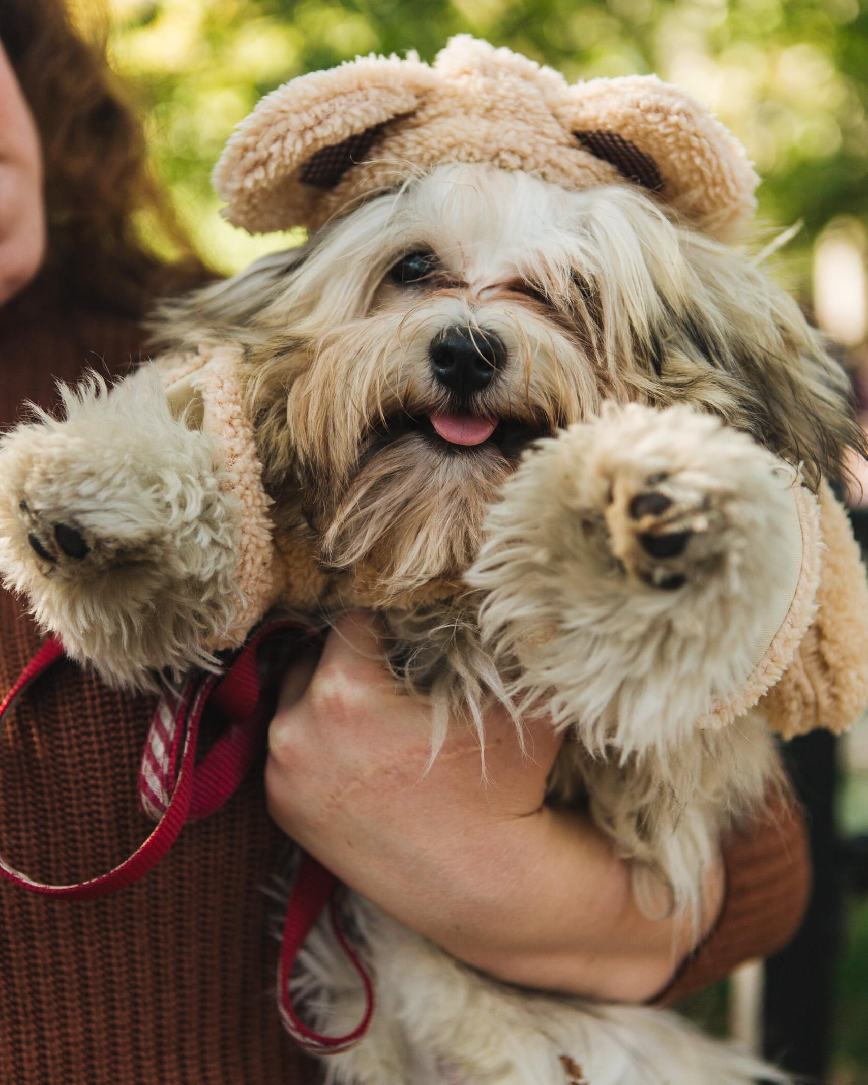 dog parade-annaletson-22.jpg