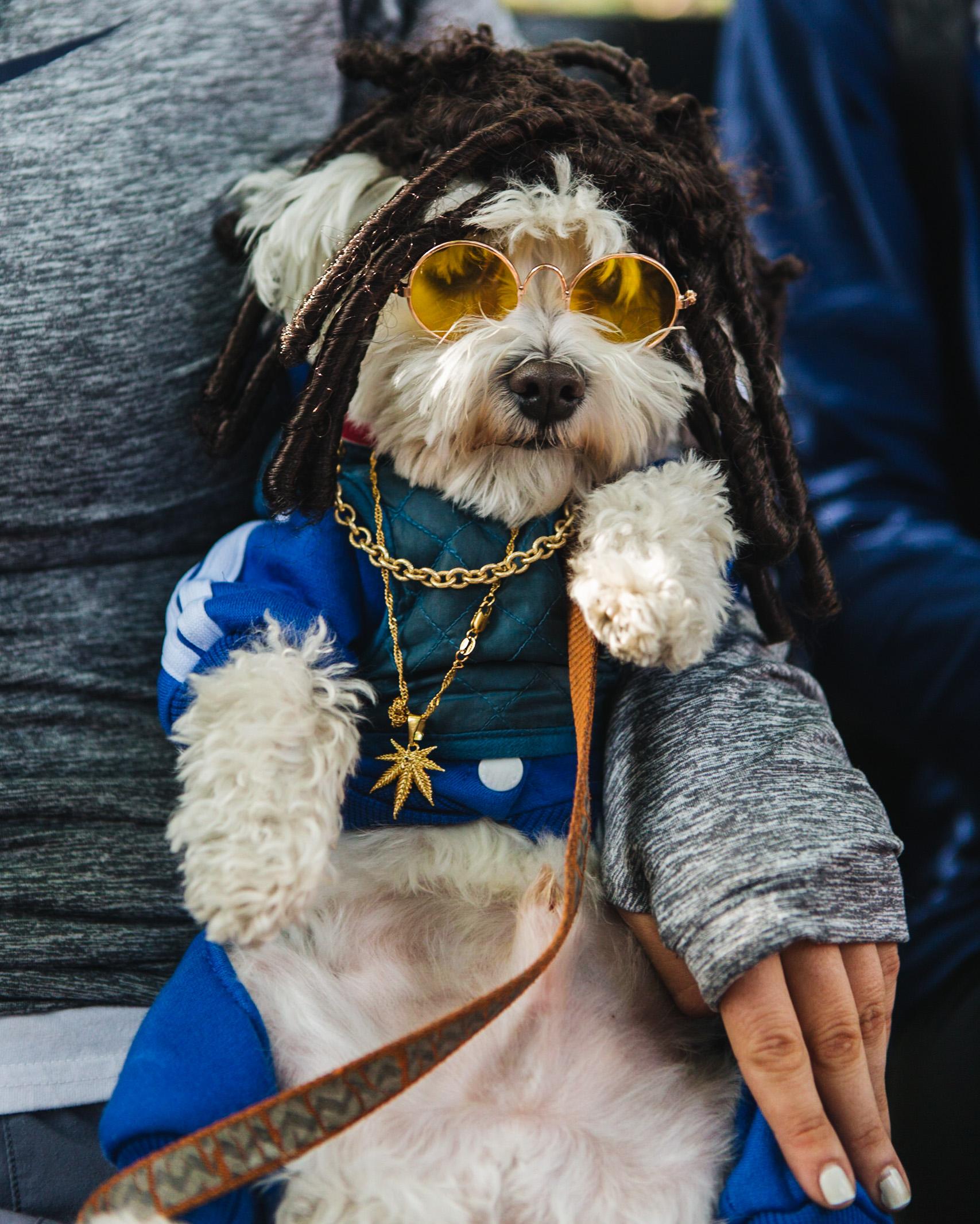 dog parade-annaletson-21.jpg