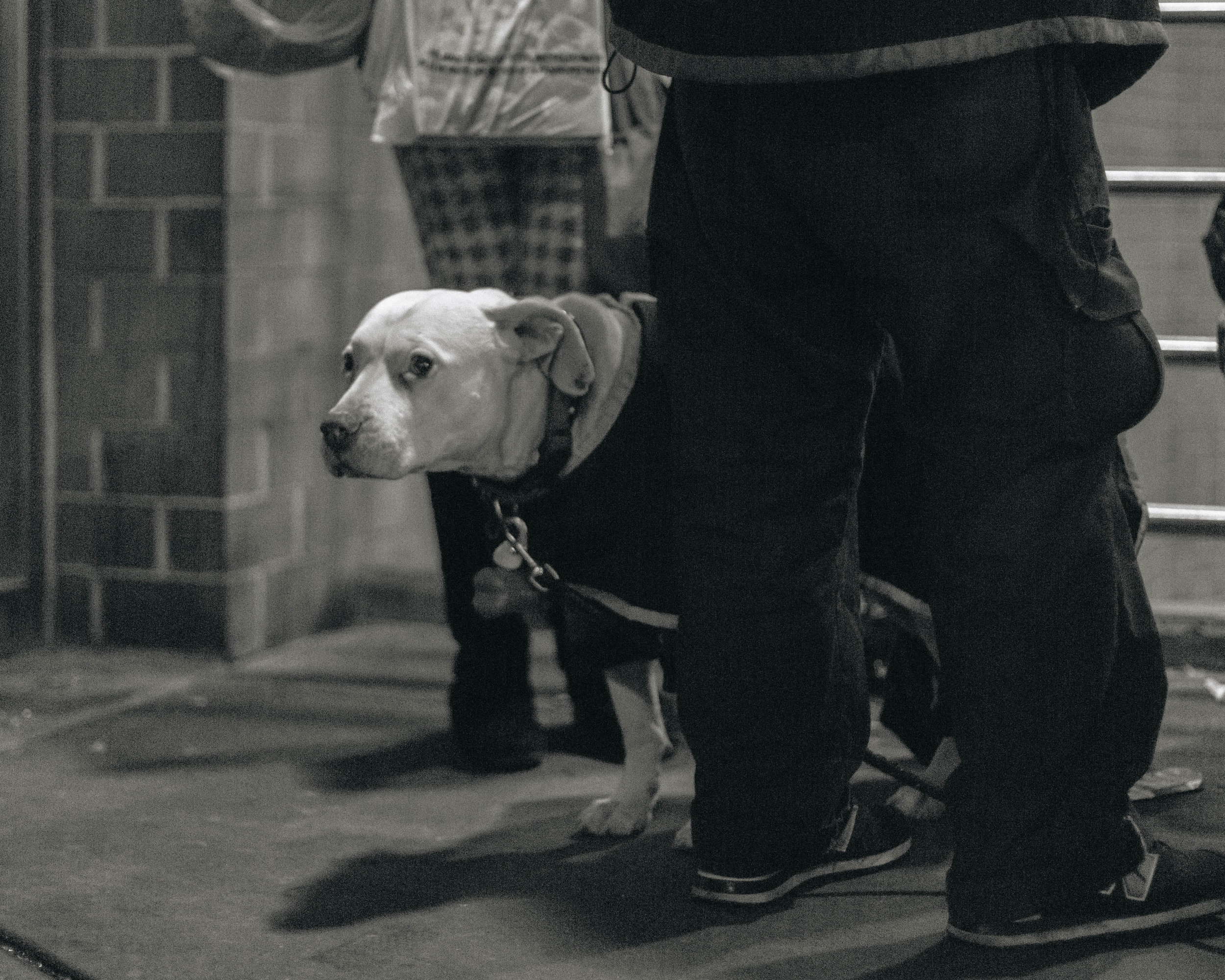 Union Square, NYC. Dogs are often companions for the homeless. Despite the number of homeless who own dogs, shelters do not accept people who own dogs, making the process of getting housing from a shelter even more complicated. A handful of hospitals accept animals.