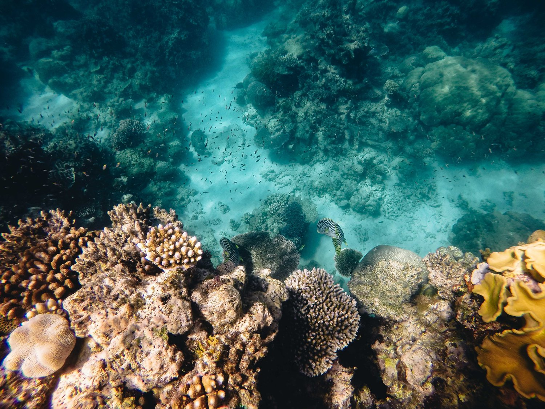 Queensland - The Great Barrier Reef, Daintree + Kuranda Rainforests