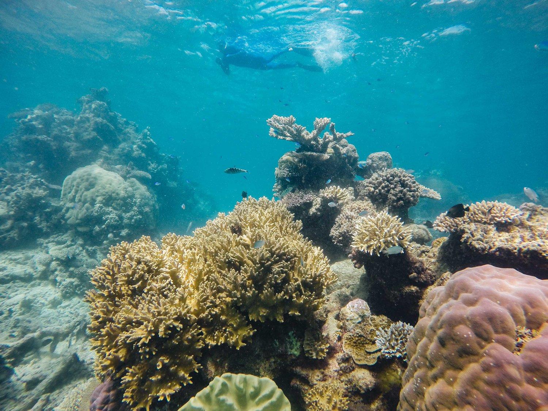 reef-5.jpg