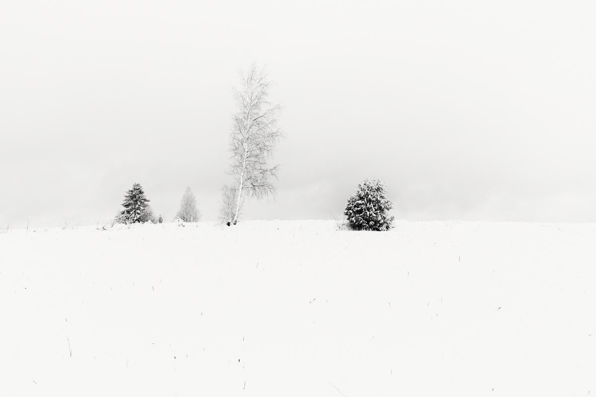 Finland Trees