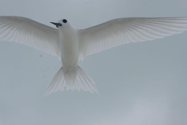 drones to monitor birds