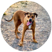 best dog hiker oakland peidmont east bay