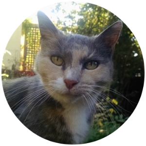 Best Oakland cat sitter