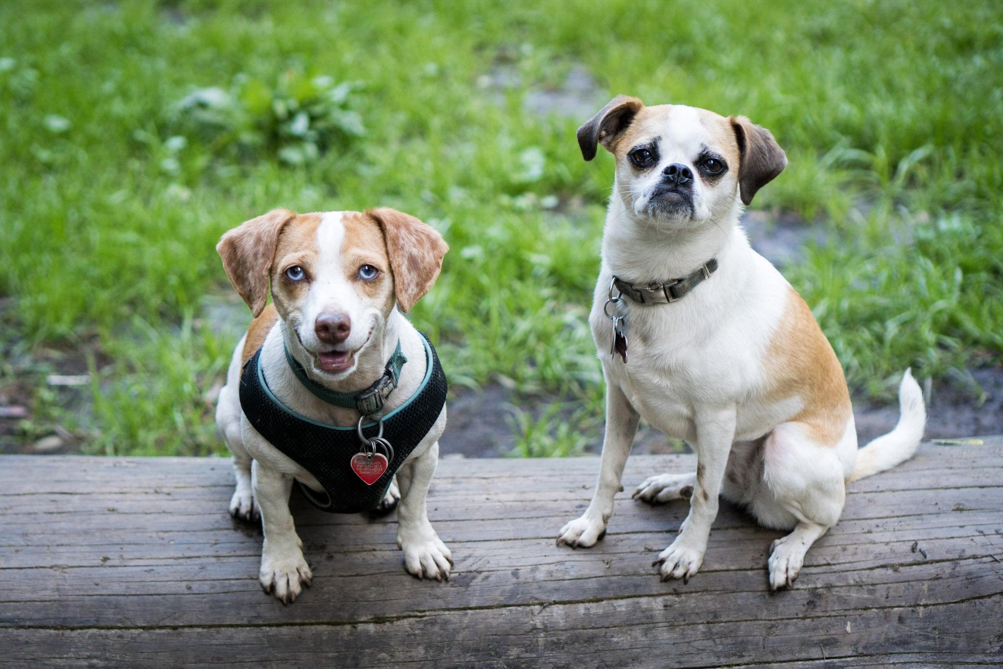 Oakland dog hikes and training