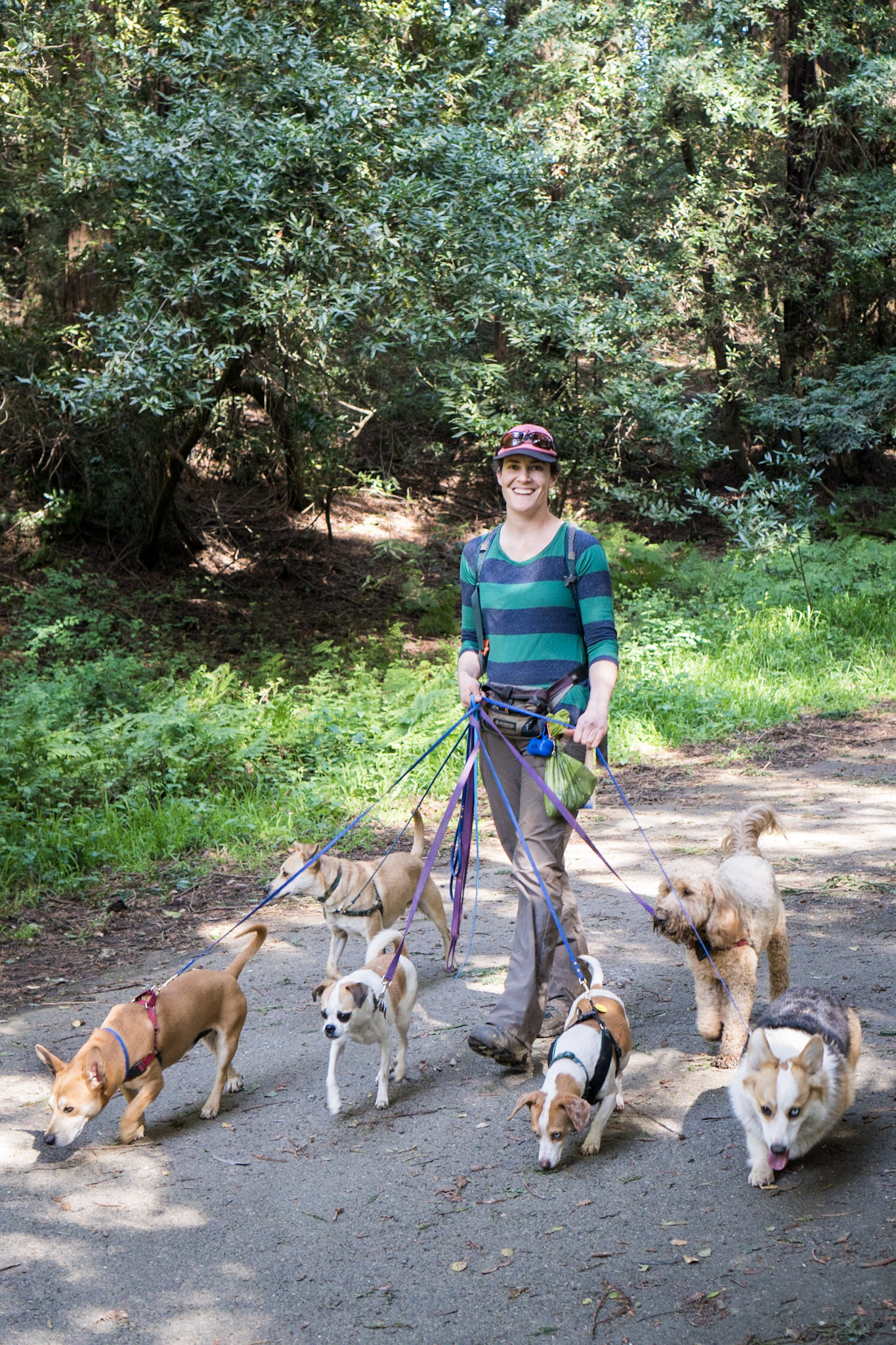 Oakland best group dog hikes