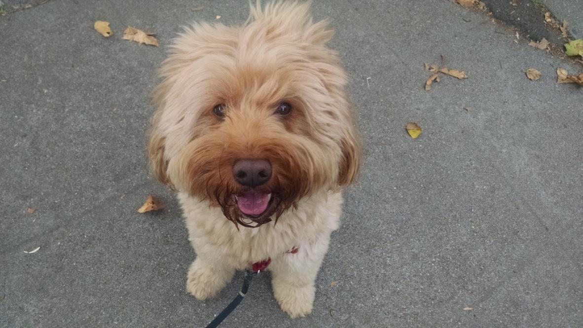 senior dog walks Oakland